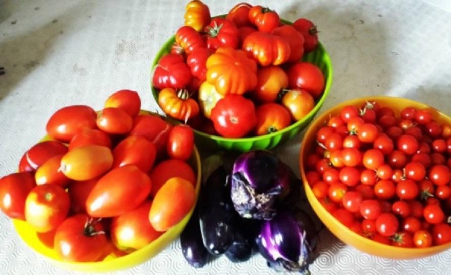 pomodori biologici dellorto